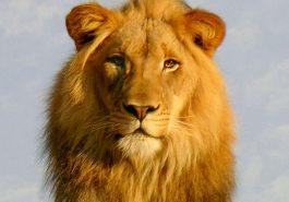 Lo mejor en la personalidad de los Leo